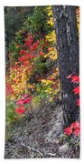 Roadside Fall Colors Beach Towel