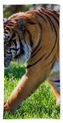 Roaming Tiger Beach Towel