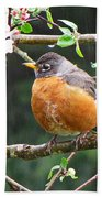 Robin In Apple Tree Beach Towel