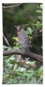 Robin In The Brush Beach Towel