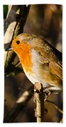 Robin In The Hedgerow Beach Towel