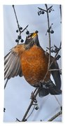 Robin Pictures 84 Beach Towel