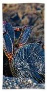 Rock Crab At He'eia Kea Pier Beach Towel