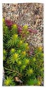 Rock Flower Beach Towel