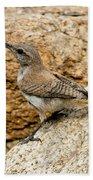 Rock Wren Juvinile Beach Towel