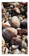 Rocks And Shells Beach Towel