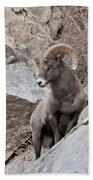 Rocky Mountain Big Horn Sheep Ram Beach Towel