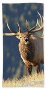 Rocky Mountain Bull Elk Bugling Beach Towel