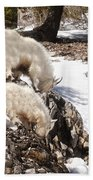 Rocky Mountain Goats - Mother And Baby Beach Towel