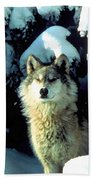 Rocky Mountain Wolf Beach Towel