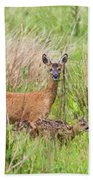 Roe Deer Capreolus Capreolus With Two Fawns Beach Towel