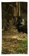 Rooster In The Hen House Beach Towel