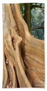 Root Of A Tree Nature Background Beach Towel