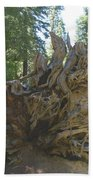 Roots Beach Towel by Barbara Snyder