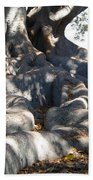 Roots Of Large Fig Tree Beach Towel