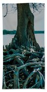 Roots On The Bay Beach Towel