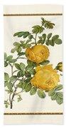 Rosa Sulfurea -yellow Rose  Square Beach Towel