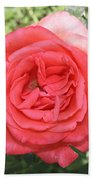 Rose At Clark Gardens Beach Towel