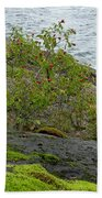Rose Hip Bush Beach Towel
