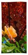 Rose In Autumn Beach Sheet