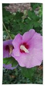 Rose Mallow Beach Towel