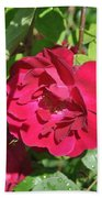 Rose On The Vine Beach Towel