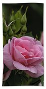 Rose Pictures 328 Beach Towel