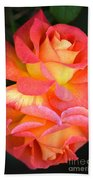 Roses Of Many Colors Beach Towel