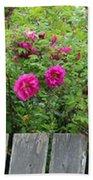Roses On A Fence Beach Towel