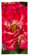 Rosey Rose Beach Towel