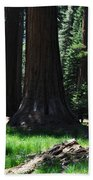 Round Meadow Sequoia Family Beach Towel