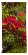 Royal Poinciana Beach Towel