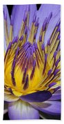 Royal Purple Water Lily #5 Beach Towel