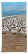 Royal Terns On The Beach Beach Towel