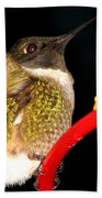 Ruby-throated Hummingbird Landing On Feeder Beach Towel