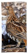 Ruffed Grouse On Alert Beach Towel