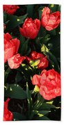 Ruffly Red Tulips Square Beach Towel