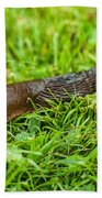 Rufous Garden Slug Beach Towel