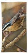 Runway Clear For Takeoff   Redbreasted Nuthatch Beach Towel