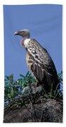 Ruppells Griffon Vulture Beach Towel