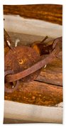 Rust Trapped On A Log - Old Trap - Casper Wyoming Beach Towel