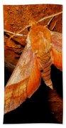 Rusty Sphinx Moth Beach Towel