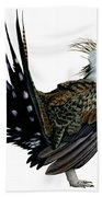 Sage Grouse  Beach Towel by Anonymous