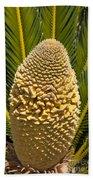 Sago Palm Seed Pod Beach Towel
