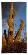Saguaro 2 Beach Towel