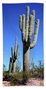 Saguaro At The Saguaro National Park Beach Towel