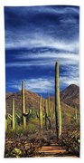 Saguaro Cactuses In Saguaro National Park Beach Towel
