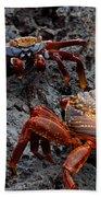 Sally Light Foot Crabs Galapagos Beach Towel