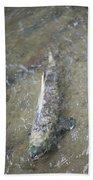 Salmon Spawning Beach Towel