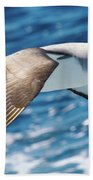 Salvins Albatross Beach Towel